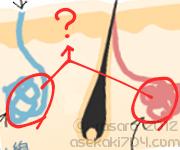 汗の出口は2つある~エクリン腺とアポクリン腺~
